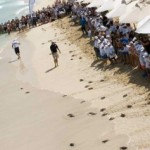 Jumeirah invites public to watch annual summer turtle release