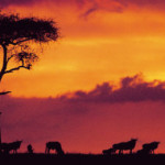 "Kenya to host Africa's ""Oscars of the Travel Industry"""