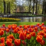 Keukenhof, unique and unforgettable!