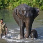 The Great Indian Elephant Safari to launch free-ranging wildlife treks on elephant-back at WTM 2013